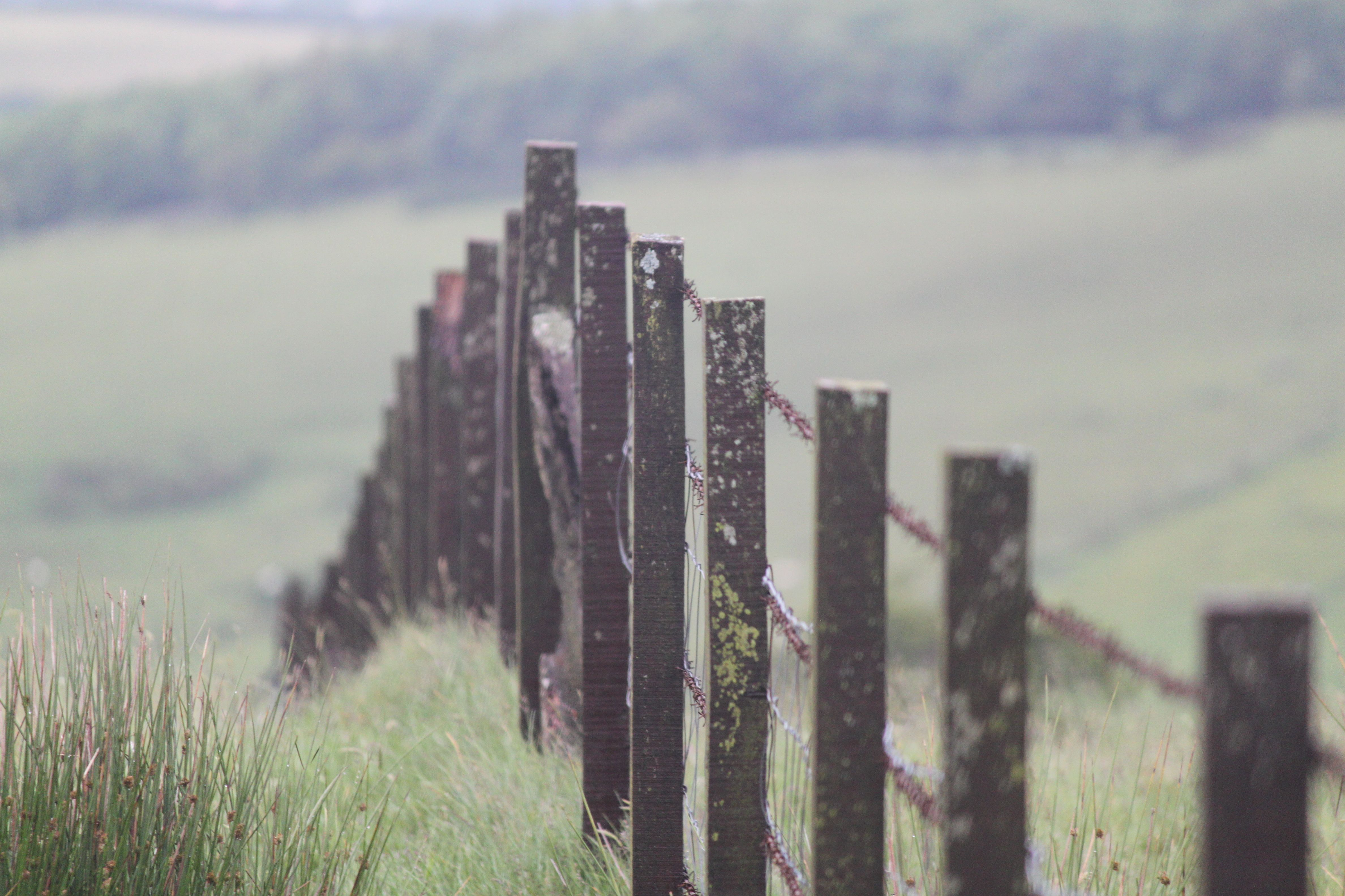 Irish pasture fence